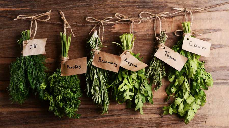 herbs-fresh-organic-green